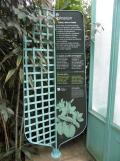 Jardin des serres d'Auteuil (87)