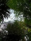Jardin des serres d'Auteuil (88)