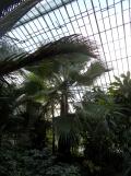 Jardin des serres d'Auteuil (91)