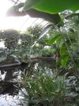 Jardin des serres d'Auteuil (95)