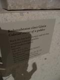 Neues Museum (64)
