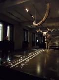 Neues Museum (94)