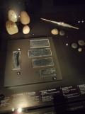 Neues Museum (96)