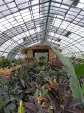 Jardin des serres d'Auteuil (15)