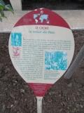Jardin des serres d'Auteuil (45)