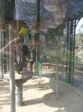 Jardin des Plantes - Nantes et retour (45)