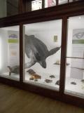 Musée d'histoire naturelle de Nantes (100)