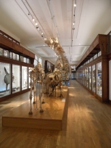 Musée d'histoire naturelle de Nantes (104)