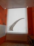 Musée d'histoire naturelle de Nantes (109)