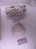 Musée d'histoire naturelle de Nantes (12)