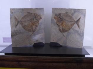 Musée d'histoire naturelle de Nantes (14)