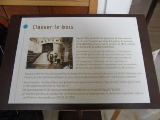 Musée d'histoire naturelle de Nantes (23)