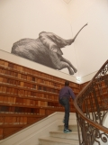 Musée d'histoire naturelle de Nantes (25)