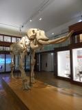 Musée d'histoire naturelle de Nantes (28)