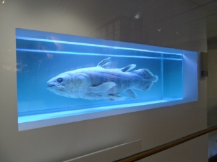 Musée d'histoire naturelle de Nantes (29)