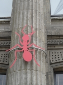 Musée d'histoire naturelle de Nantes (3)