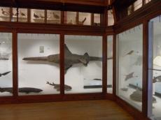 Musée d'histoire naturelle de Nantes (32)