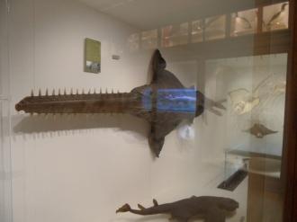 Musée d'histoire naturelle de Nantes (34)
