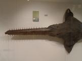 Musée d'histoire naturelle de Nantes (35)