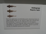 Musée d'histoire naturelle de Nantes (43)