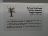 Musée d'histoire naturelle de Nantes (44)