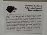 Musée d'histoire naturelle de Nantes (53)