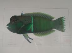 Musée d'histoire naturelle de Nantes (56)