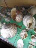 Musée d'histoire naturelle de Nantes (62)