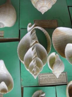 Musée d'histoire naturelle de Nantes (65)
