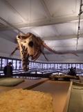 Musée d'histoire naturelle de Nantes (7)