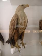 Musée d'histoire naturelle de Nantes (70)