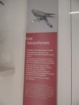 Musée d'histoire naturelle de Nantes (71)
