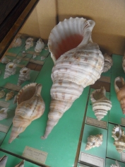 Musée d'histoire naturelle de Nantes (79)
