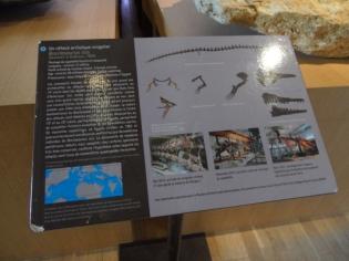 Musée d'histoire naturelle de Nantes (8)
