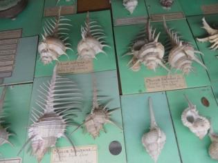 Musée d'histoire naturelle de Nantes (80)