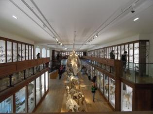 Musée d'histoire naturelle de Nantes (83)