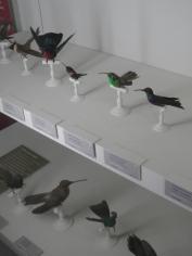 Musée d'histoire naturelle de Nantes (90)