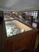 Musée d'histoire naturelle de Nantes (93)
