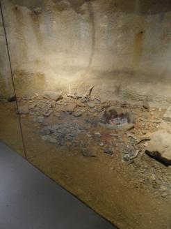 Musée d'Aquitaine (103)
