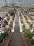 2. Jardins d'Orient (132)