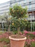 2. Jardins d'Orient (154)