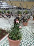 2. Jardins d'Orient (158)