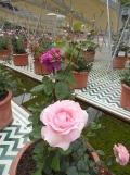 2. Jardins d'Orient (159)