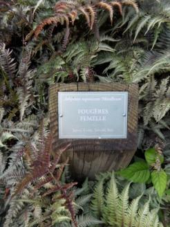 Fougères (91)