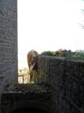 Au Mont Saint Michel (306)