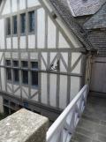 Au Mont Saint Michel (481)
