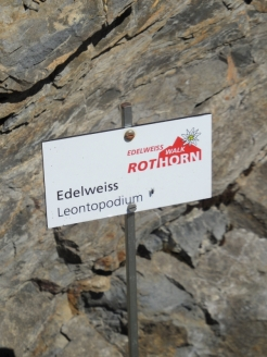 brienzer-rothorn-183