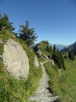 wilderswil-schynige-platte-114