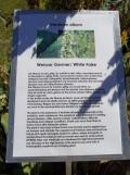 wilderswil-schynige-platte-186