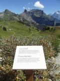 wilderswil-schynige-platte-198